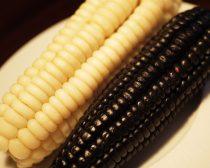 ペルー産トウモロコシ「チョクロ」