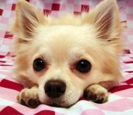 犬,キラキラネーム