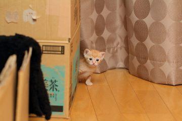 子猫,ケニア ドイ