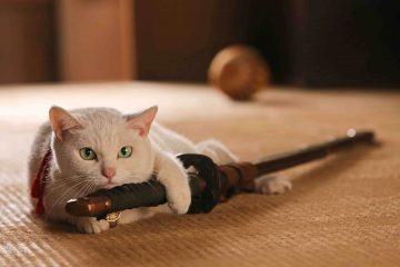 猫侍,玉之丞