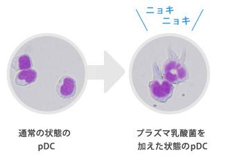 プラズマ乳酸菌