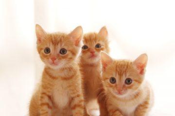 カメラ目線の3匹の子猫