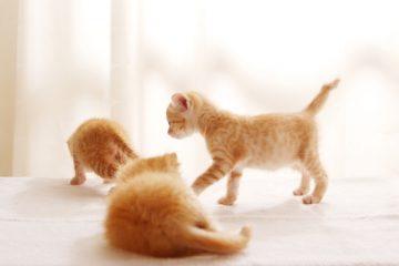 集合する子猫たち