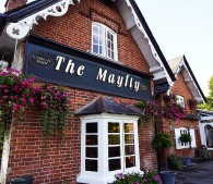 The Mayfly