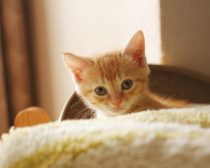 子猫E子(写真1)