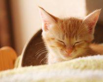 子猫E子(写真2)
