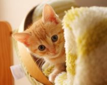 子猫E子(写真3)
