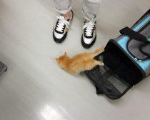 脱走する子猫(F男)