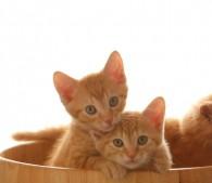 子猫3匹(4)