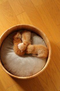 桶に入る子猫(6月3日の写真)