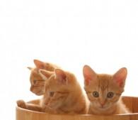 子猫3匹(1)