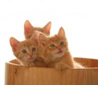 子猫3匹(5)
