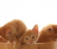 子猫3匹(3)