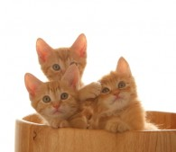 子猫3匹(6)