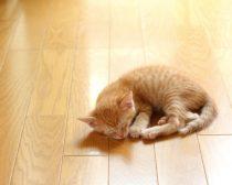 フローリングに寝転ぶ子猫(D男)