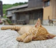住民15人、猫100匹の「猫島」――猫写真家が語る「猫をかわいく撮るコツ」