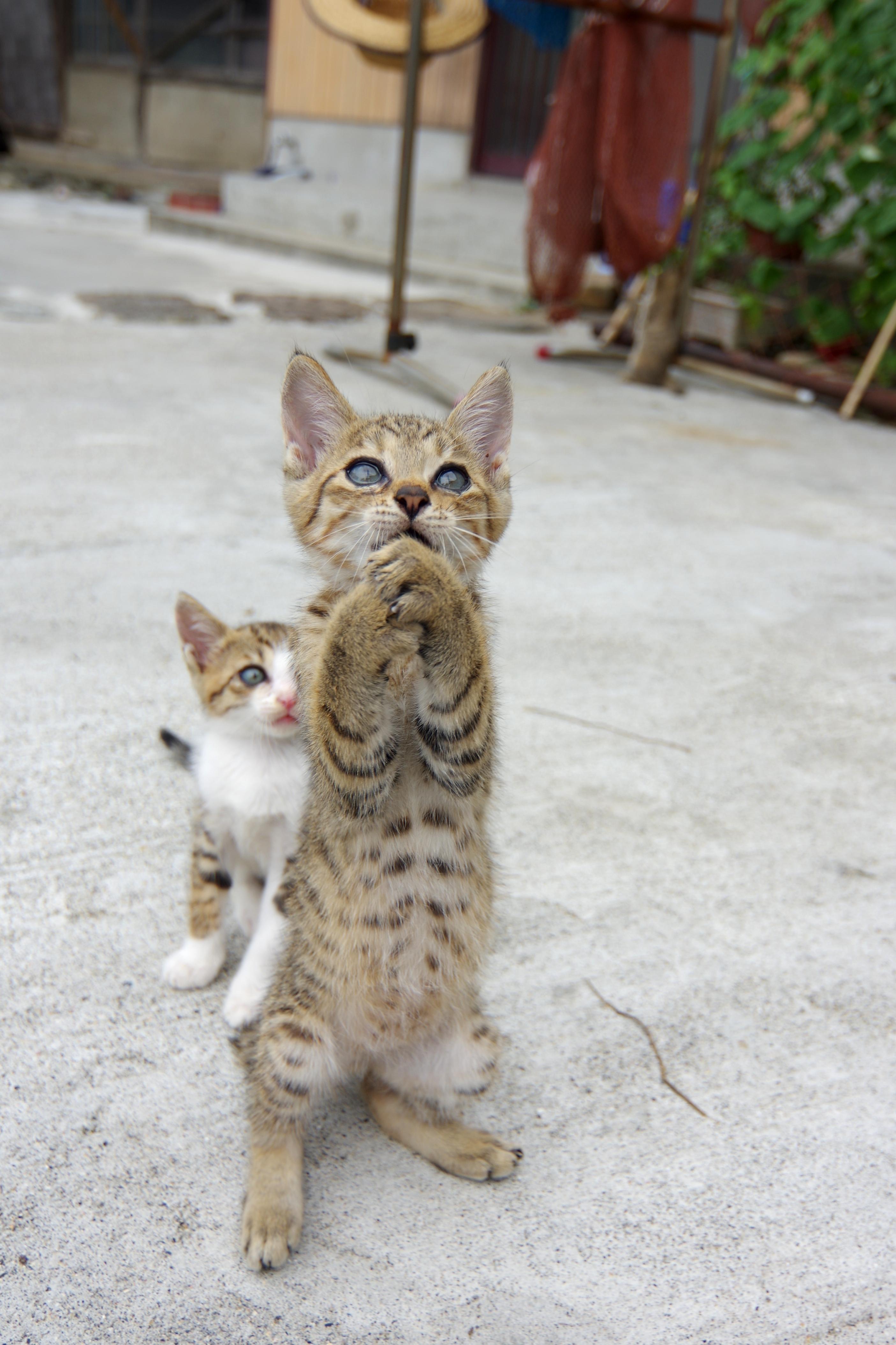 猫島こと愛媛県の青島の猫(写真:1)
