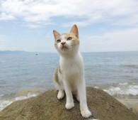 猫島こと愛媛県の青島の猫(写真:5)