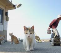 猫島こと愛媛県の青島の猫(写真:2)