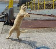 猫島こと愛媛県の青島の猫(写真:3)