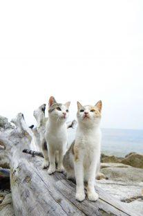 猫島こと愛媛県の青島の猫(写真:4)