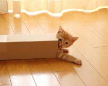 長細い段ボールに入った猫