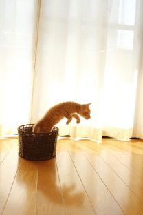 カゴから飛び出る子猫