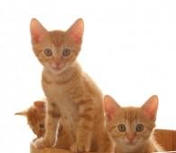 子猫3匹(2)