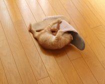 スリッパに入ろうとする子猫