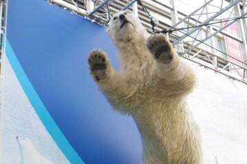 宙に浮く白クマ(4)