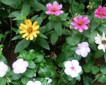 雨に濡れた花(ARROWS NX F-02Gで撮影)