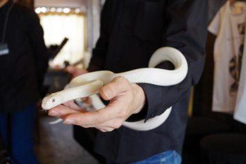 かわいいヘビが接客してくれる!期間限定・へびカフェに行ってみた
