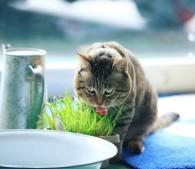 ぽちゃ猫ワンダー(10)
