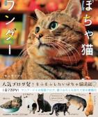 ぽちゃ猫ワンダー(表紙)