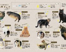 ぽちゃ猫ワンダー(3)