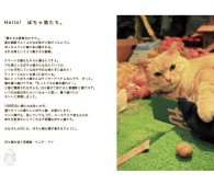 ぽちゃ猫ワンダー(2)