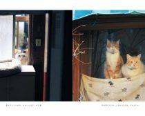 ぽちゃ猫ワンダー(1)