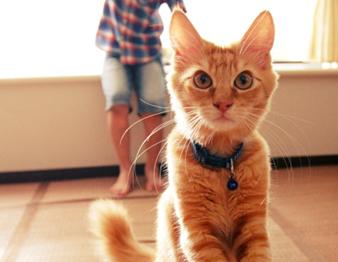 里親にいった子猫たち、こんなに大きくなりました【子猫育て日記・その後】