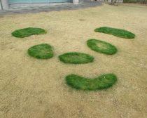 芝生のパンダ