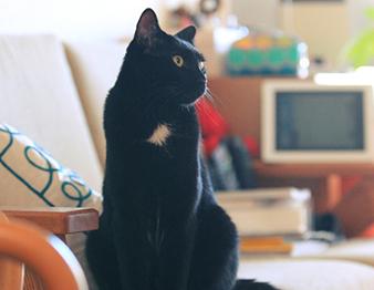 保護ネコ・大吉くんの宝物<br />【ケニア・ドイの猫写ニッキ】