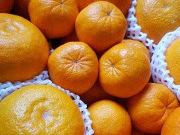 着色促進剤、防腐処理剤など一切不使用の柑橘(飛田柑橘園提供)