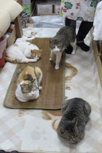 ネコの休憩所