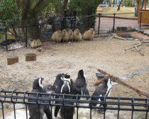 カピバラとペンギン