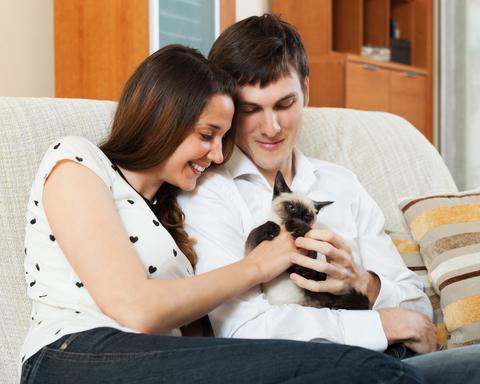 子猫を飼って夫婦の営みがなくなりました