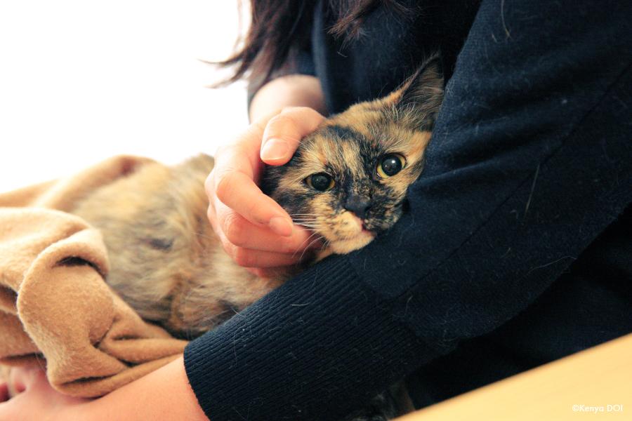 """""""サビ猫""""は""""サビ猫""""を呼ぶ!? 3匹の甘えんぼ猫たち【ケニア・ドイの猫写ニッキ】"""