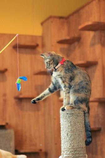 猫じゃらしにじゃれるポッポちゃん