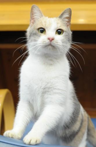 女優猫のドロップ