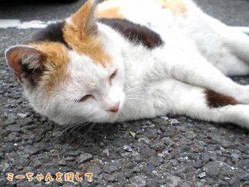 地域猫・みーちゃん