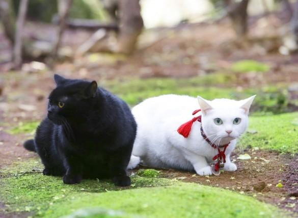 『猫侍 南の島へ行く』より_2