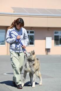 施設内の犬_2